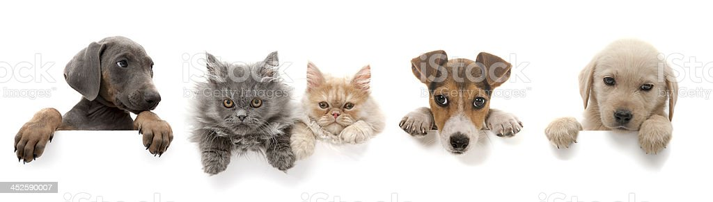dogs and cats above white banner stock photo