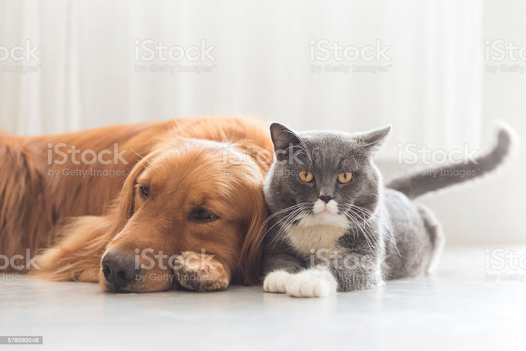 Dogs and cats snuggle together