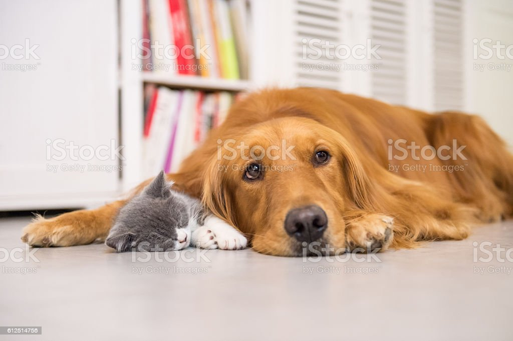 Dogs and cats, taken indoors stock photo