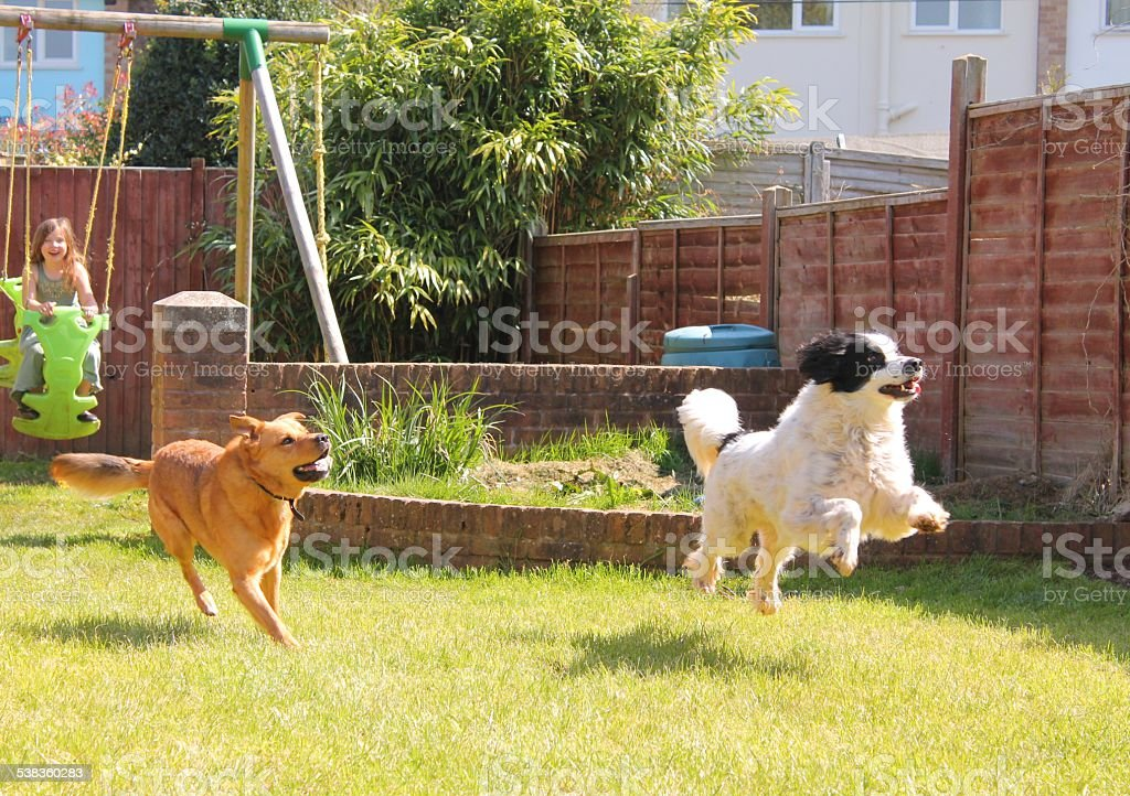 Dogs and kids playing in the garden stock photo