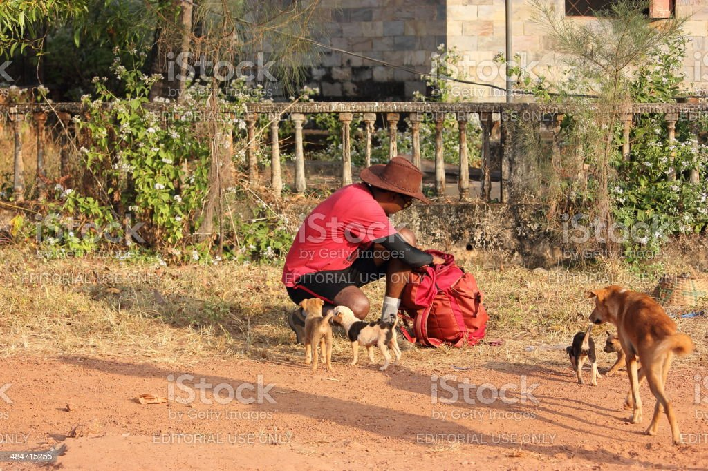 Dogs are best friends of human beings stock photo