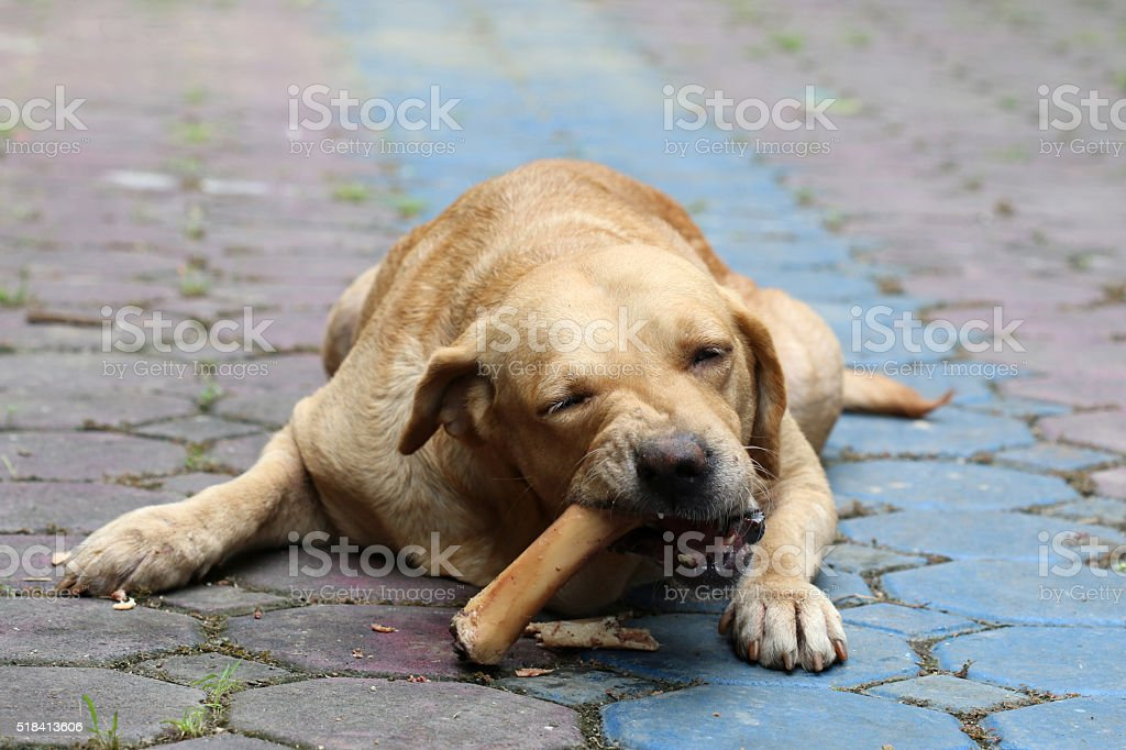 Dogs are gnawing on the bones stock photo