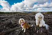 Dogs at a deforestation disaster area