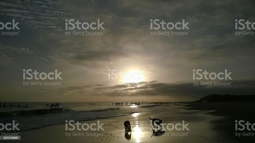 Dogs at dawn on the beach stock photo