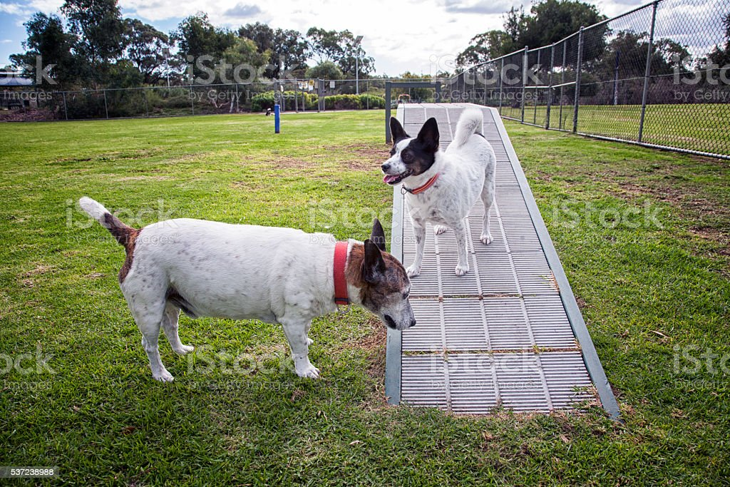 Dogs At Fenced Dog Park stock photo