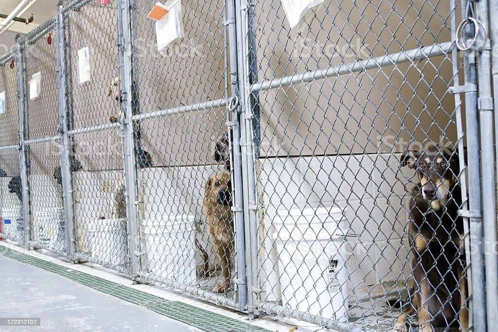 Dogs Awaiting Adoption stock photo