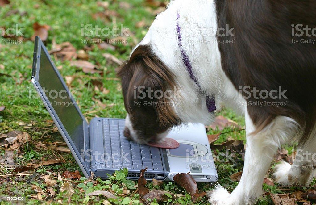 Dog's best friend royalty-free stock photo