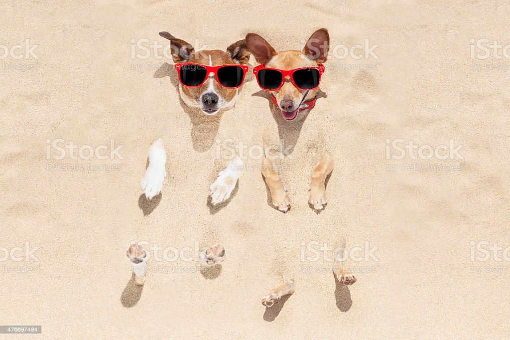 dogs buried in sand stock photo
