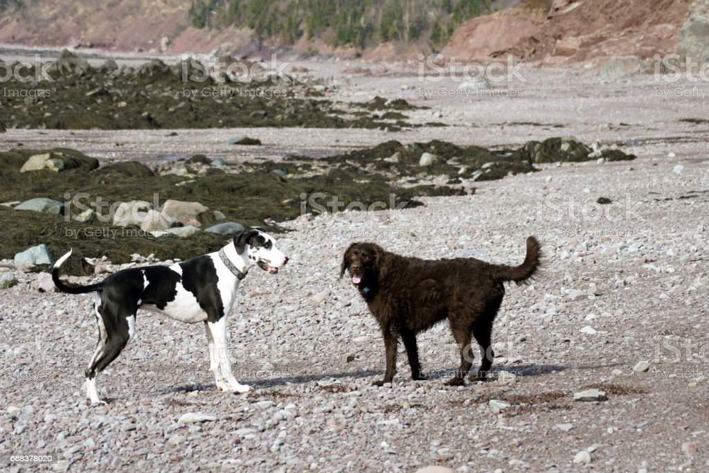 Dogs by the seaside stock photo