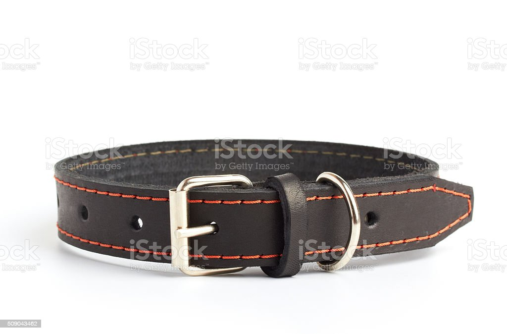 dogs collar stock photo