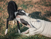 Dogs cuddle