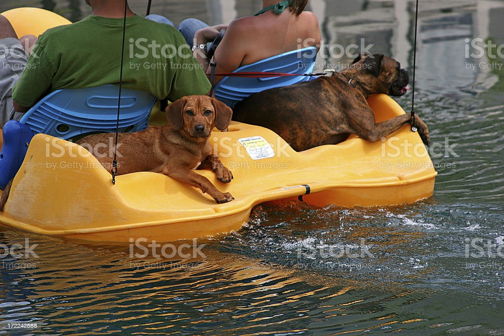 Dog's Day Out royalty-free stock photo