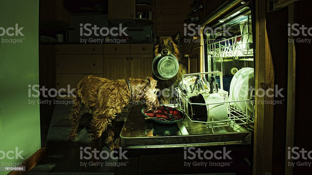 Dogs Dish Washing royalty-free stock photo