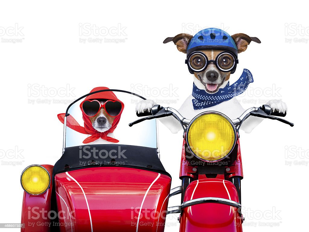 Dogs driving and riding in a red motorbike stock photo