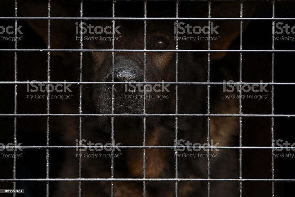 Dogs eyes royalty-free stock photo