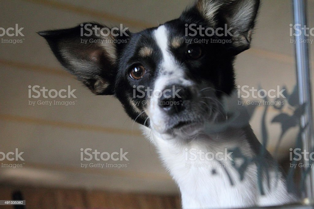 Dog's face in mirror stock photo