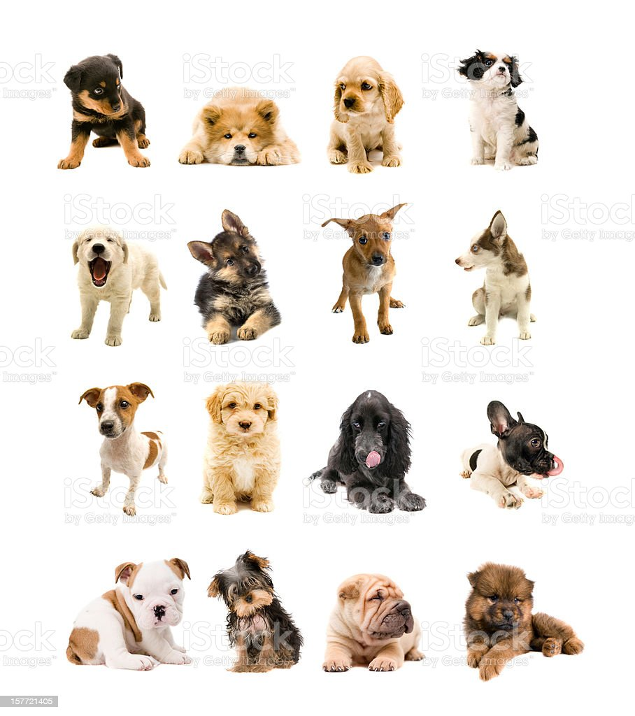 dogs family stock photo