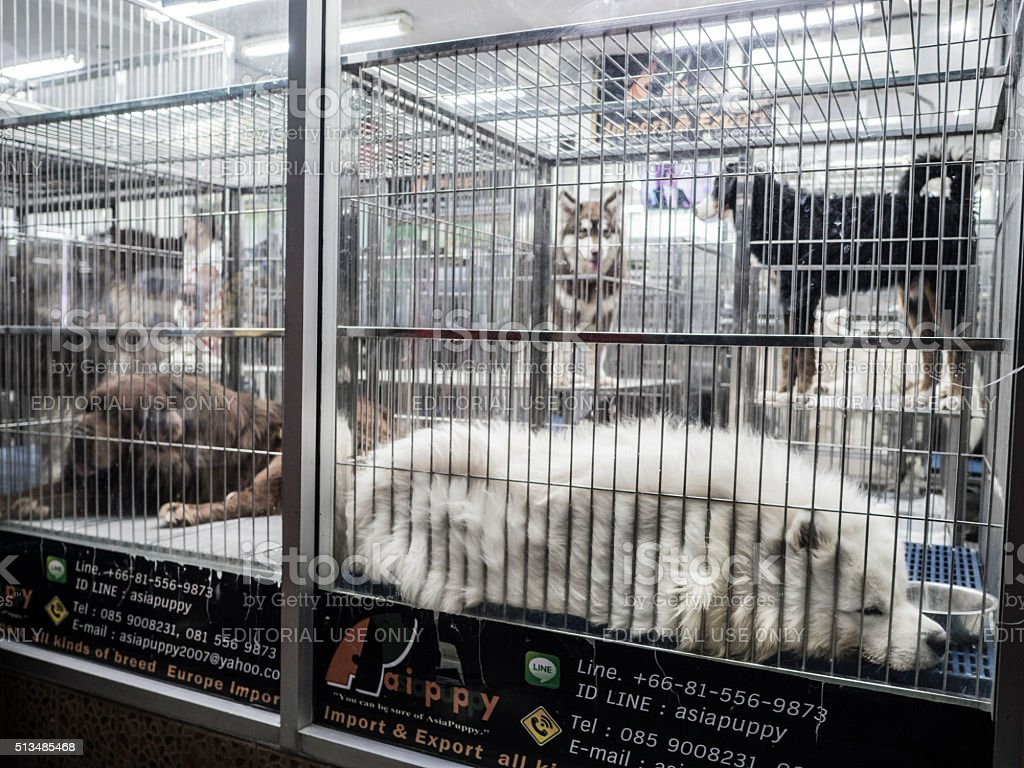 Dogs for sale at Chatuchak market Bangkok Thailand stock photo