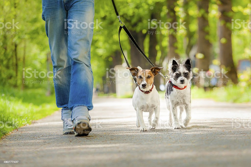 dogs going for a walk stock photo