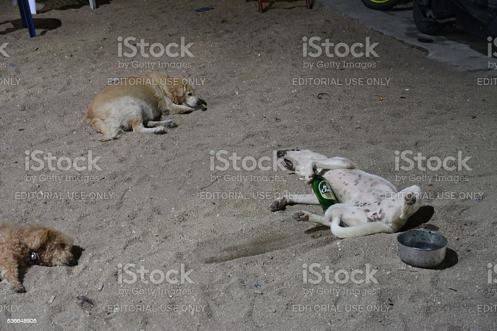 Dogs hangover at Pattaya beach by night, Thailand stock photo
