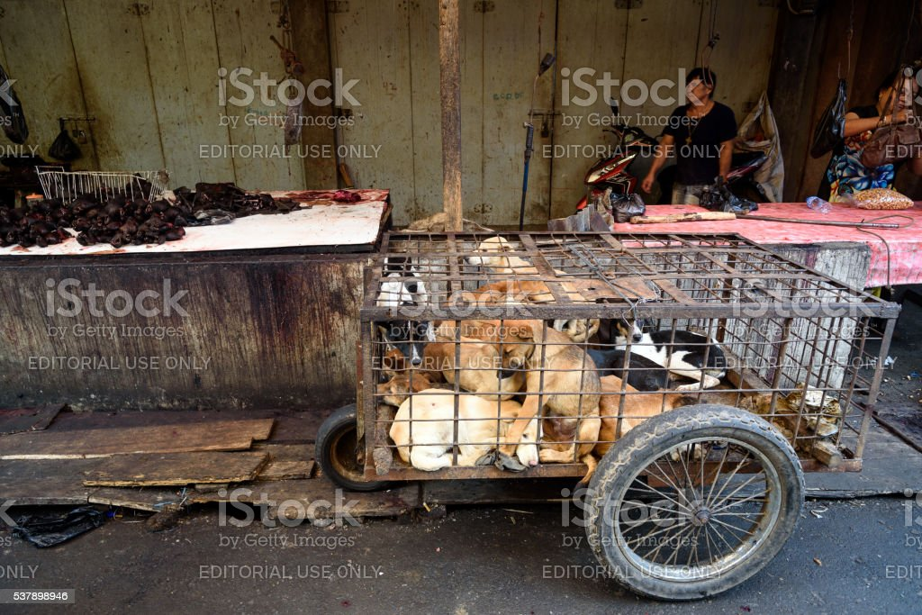 Dogs in cage awaiting slaughter on Tomohon Traditional Market stock photo