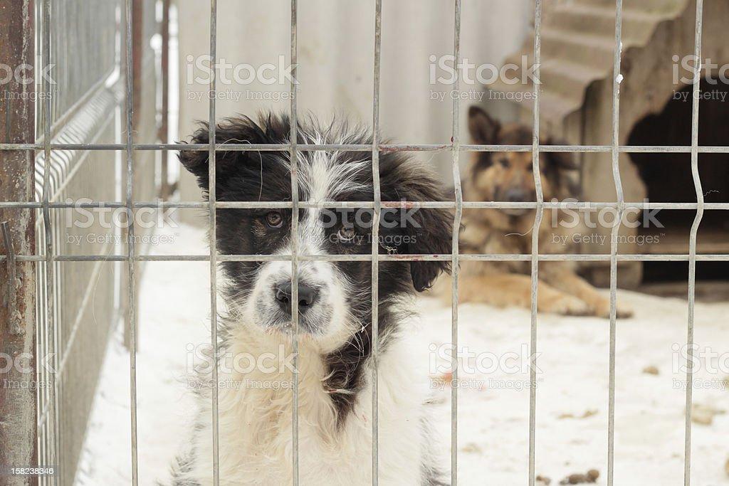 dogs in captivity stock photo