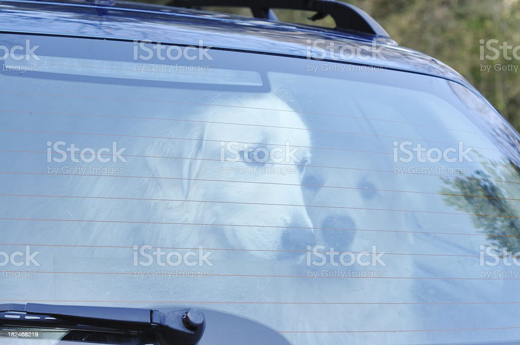 dogs in car boot stock photo