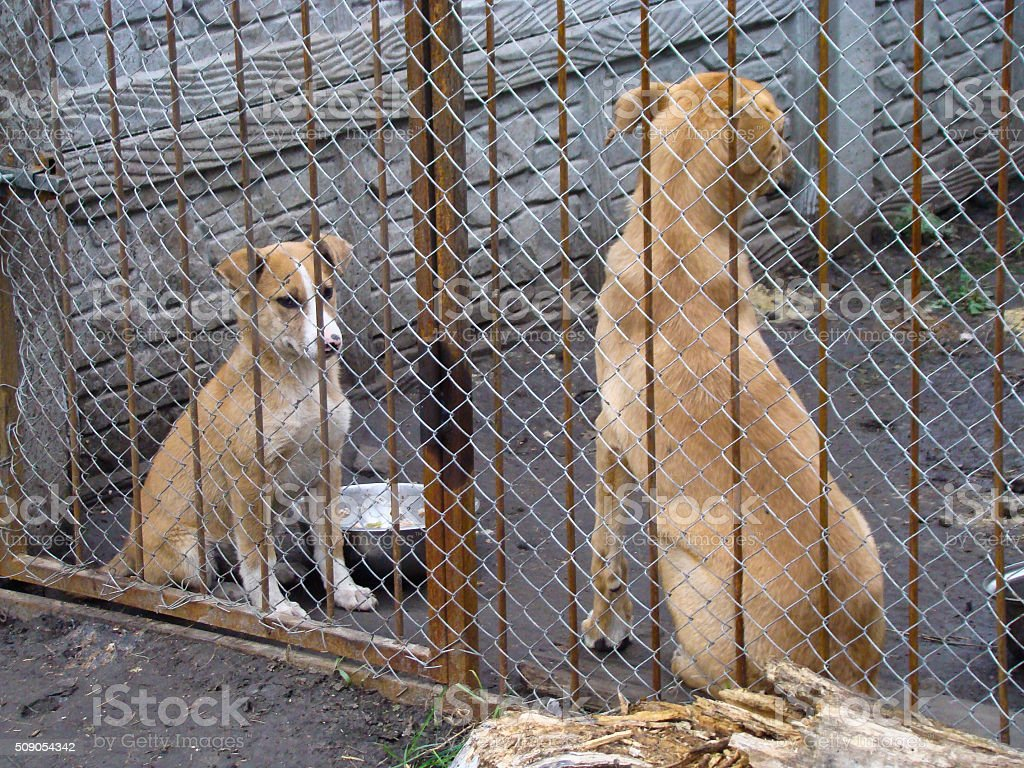 Dogs in dog shelter stock photo