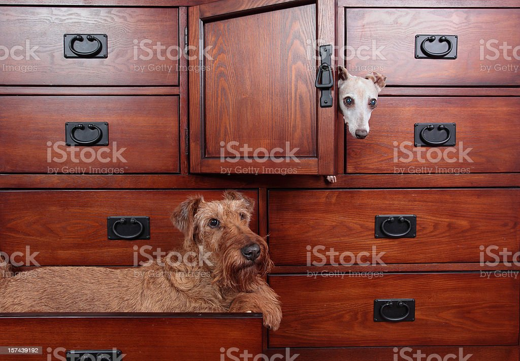 Dogs in Dresser stock photo