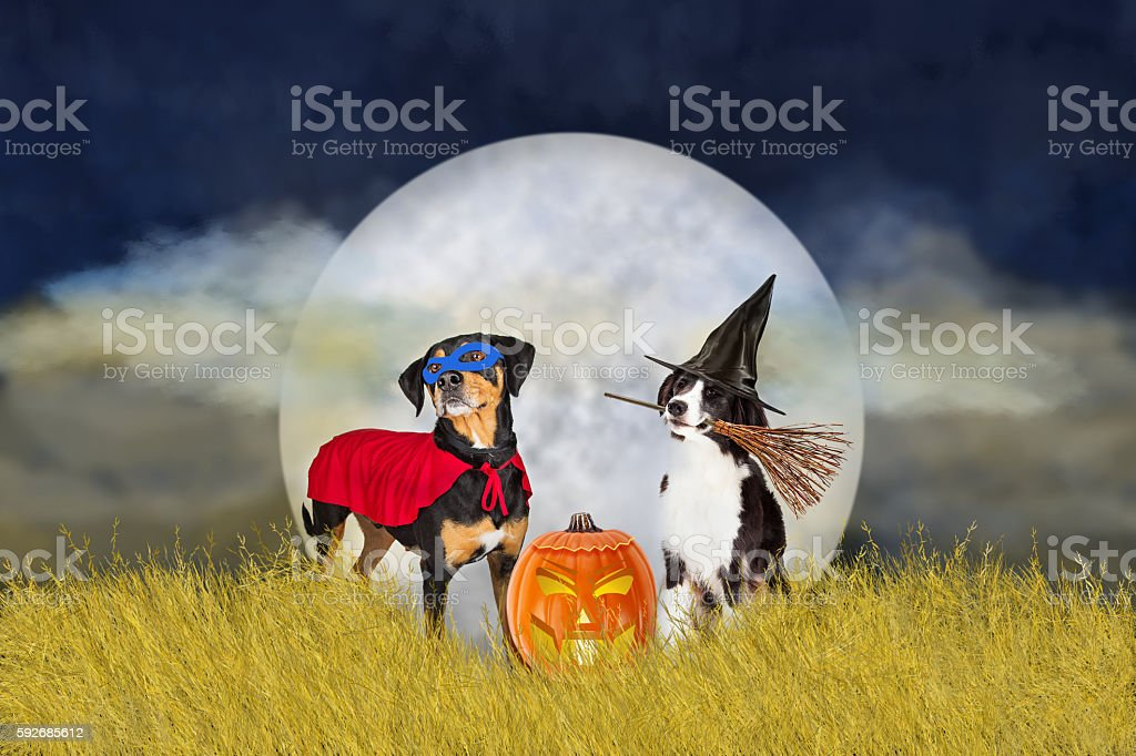 Dogs in Halloween Costumes at Night stock photo