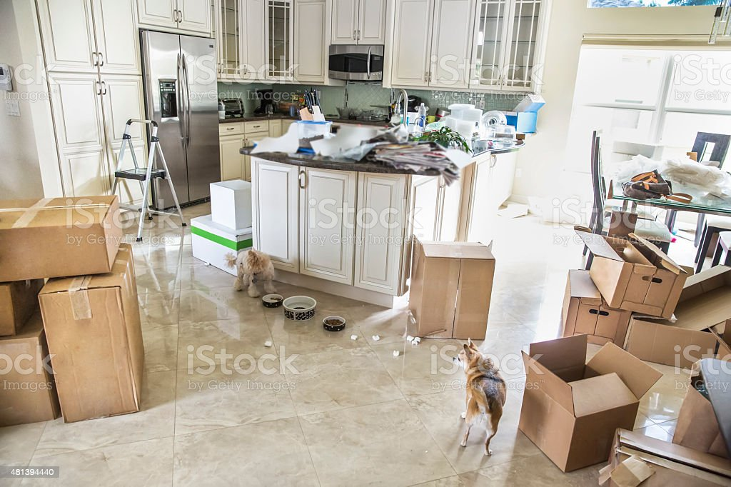 Dogs in kitchen with packing boxes on floor for moving stock photo