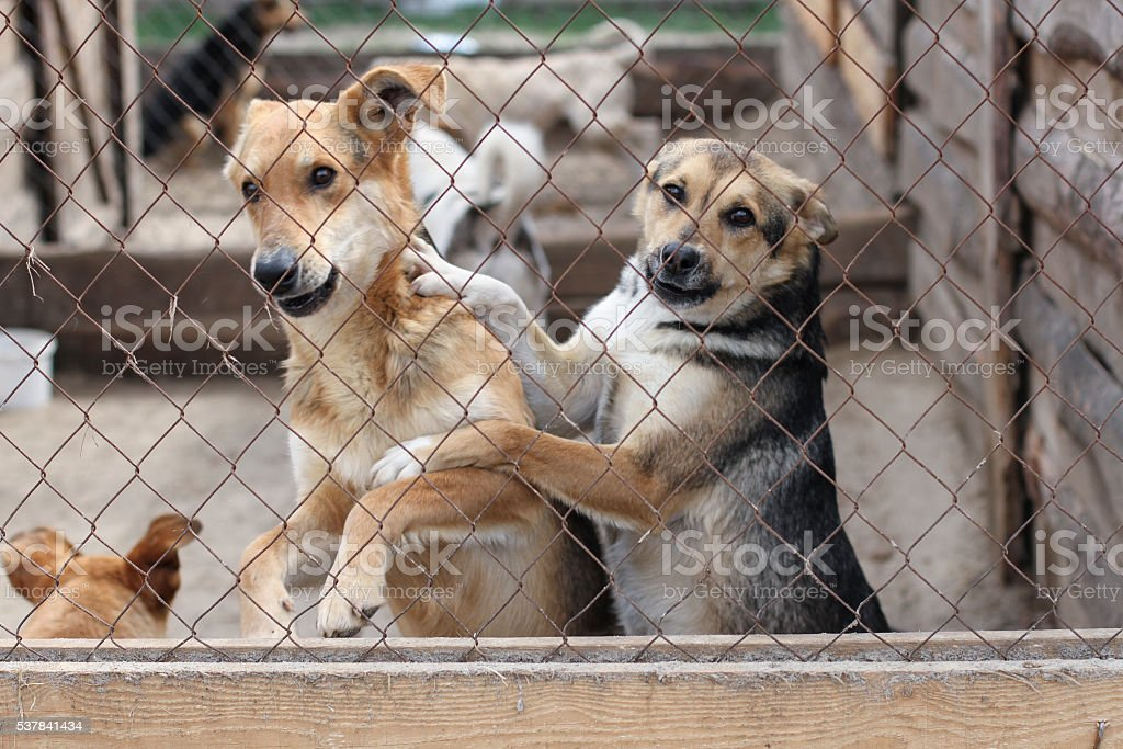 dogs in shelter cages needs family stock photo