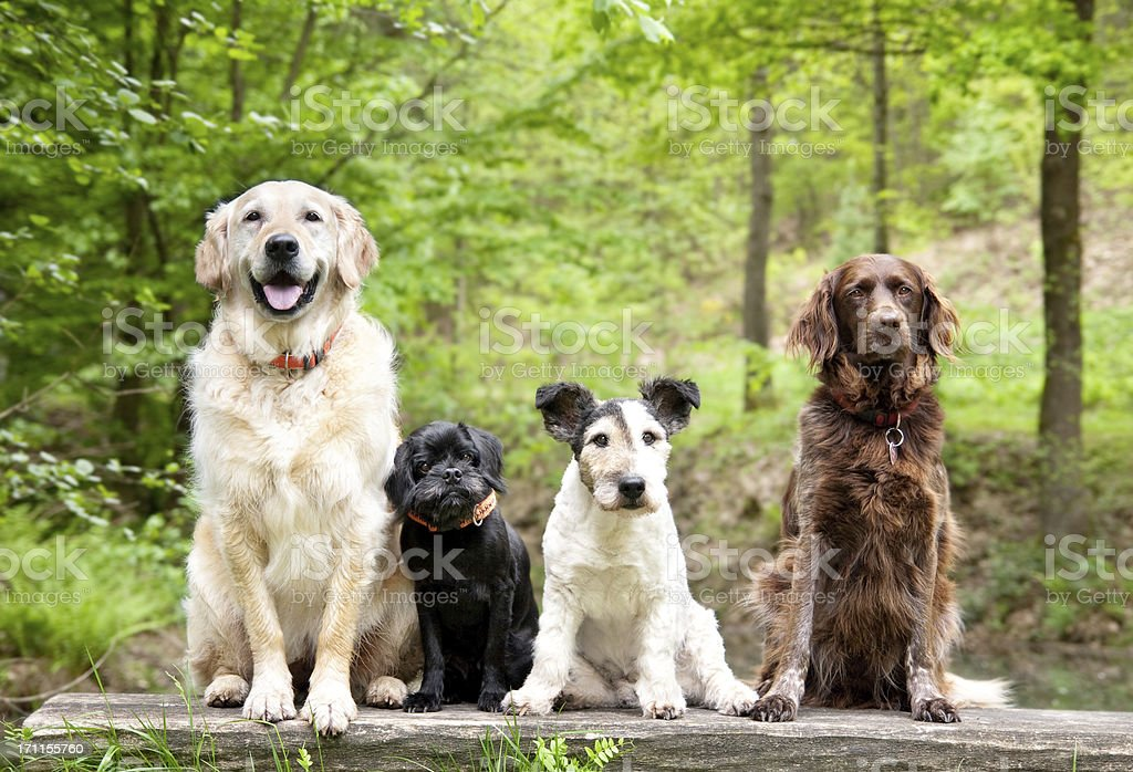 Dogs in the forest stock photo