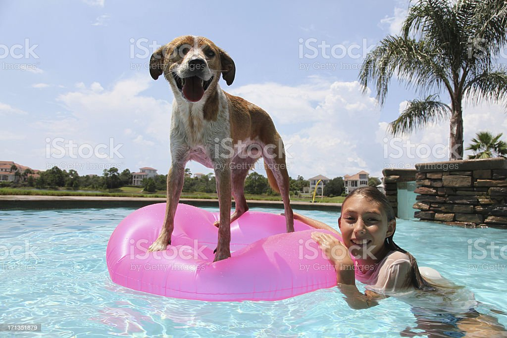 Dogs just want to have fun stock photo