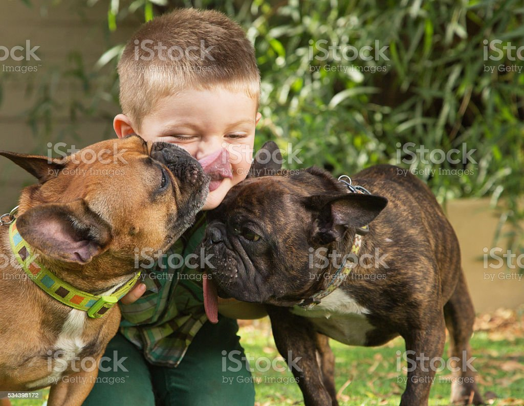 Dogs Licking a Little Boy stock photo