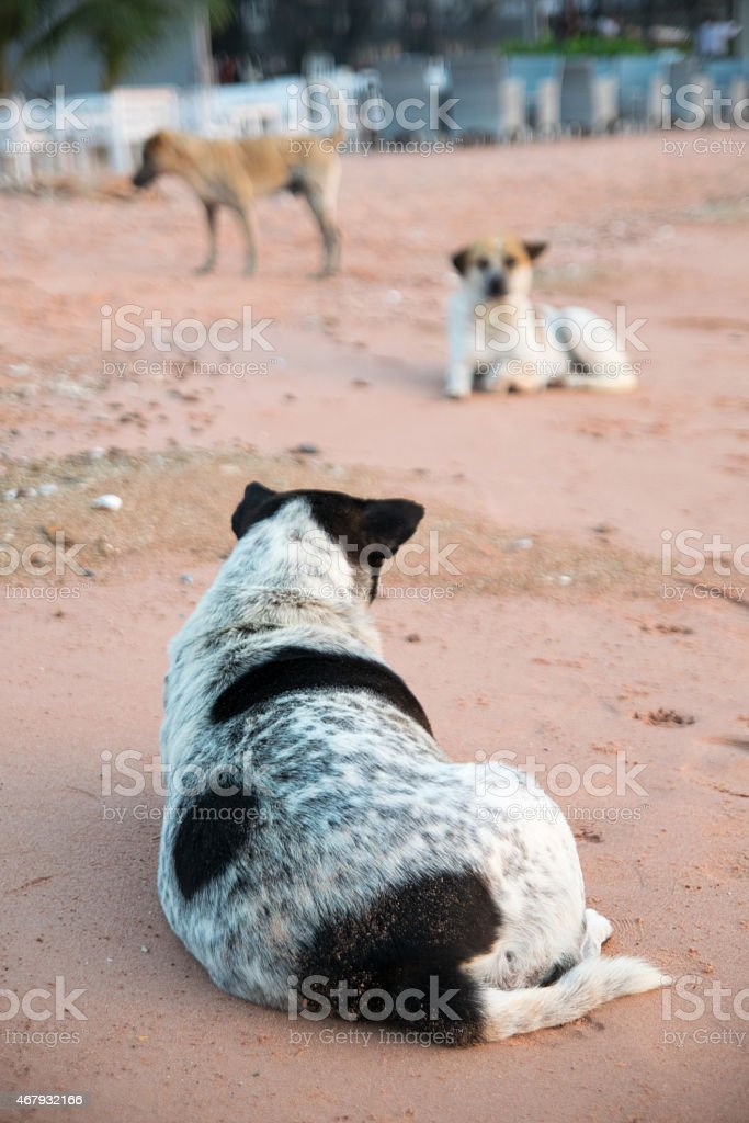 Dogs lie on the beach stock photo