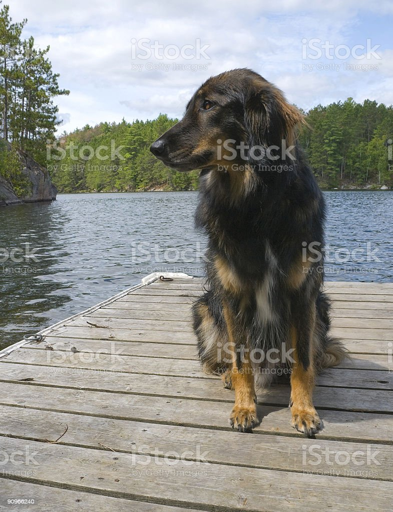 Dog's Life at the Cottage royalty-free stock photo