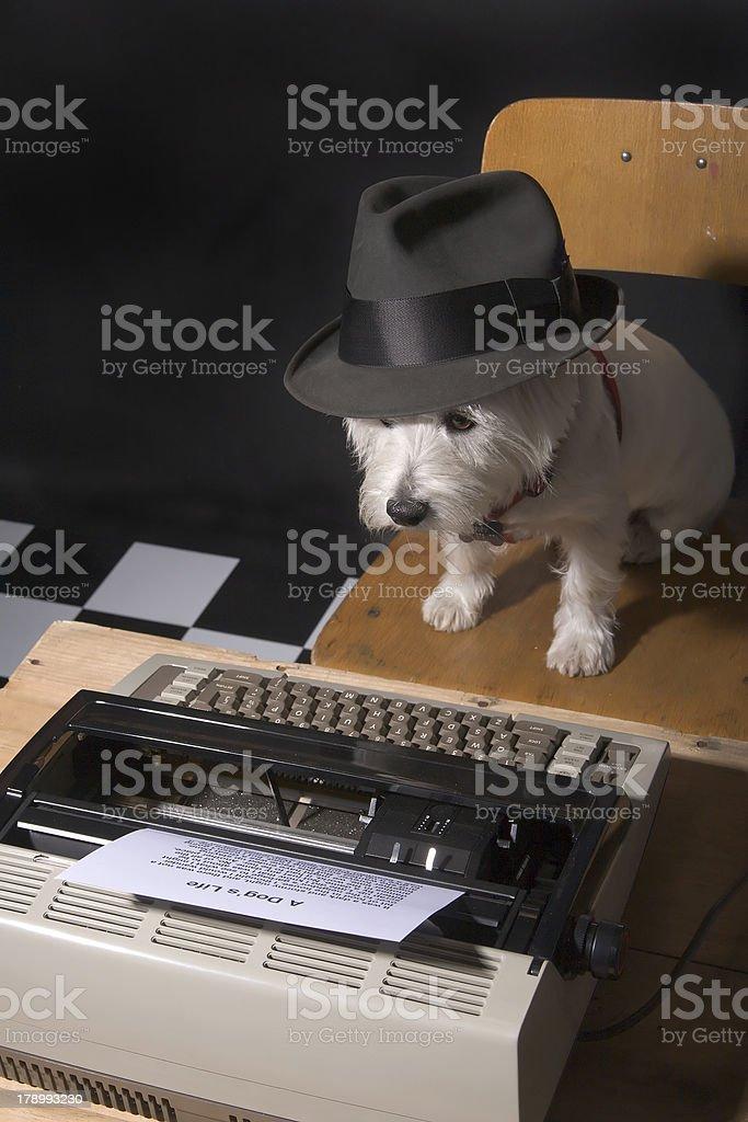 Dog's Life royalty-free stock photo