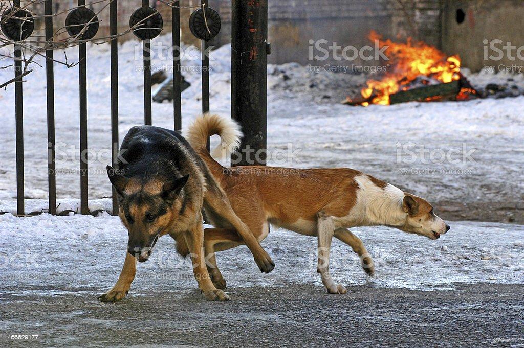 Dogs love stock photo