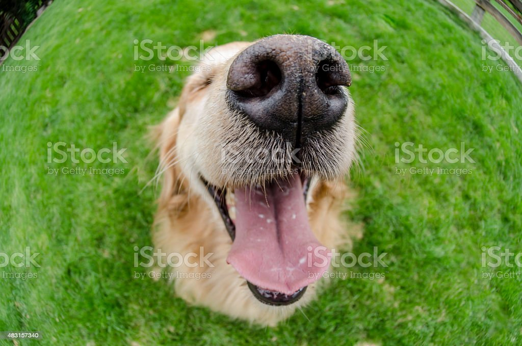 Dogs Mouth Close Up with Eye Shut stock photo