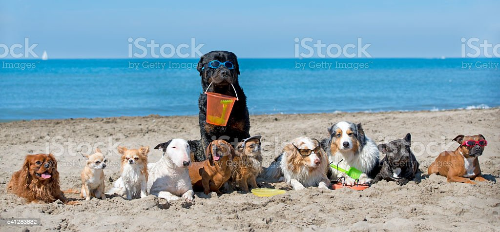 dogs on beach stock photo