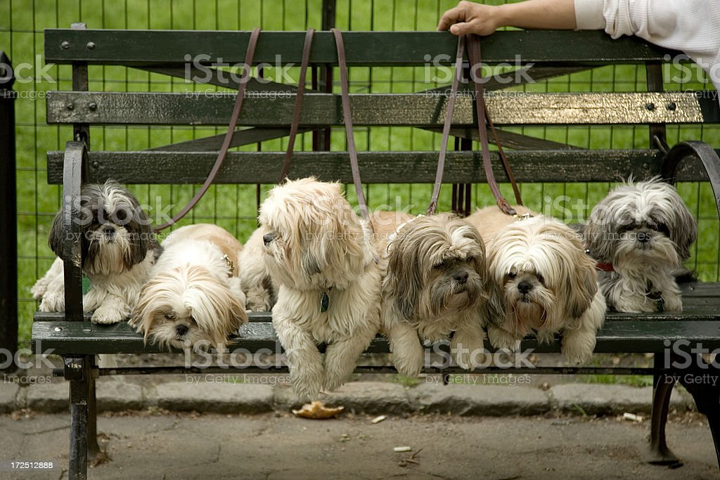 Dogs on Bench royalty-free stock photo