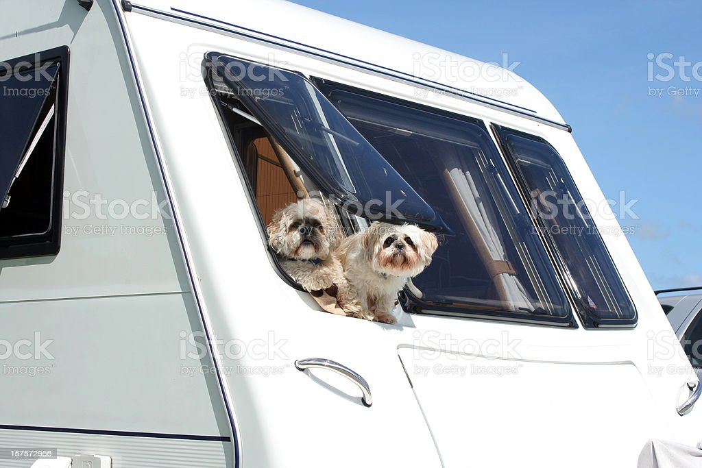 Dogs on Holiday royalty-free stock photo