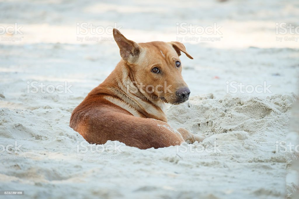 Dogs on the beach at thailand. stock photo