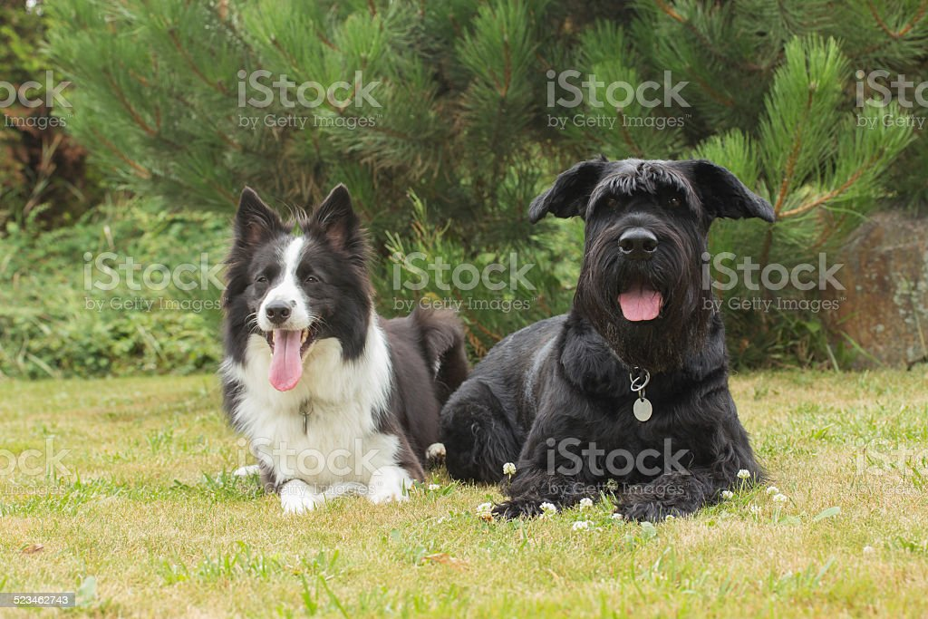 Dogs Outdoors stock photo