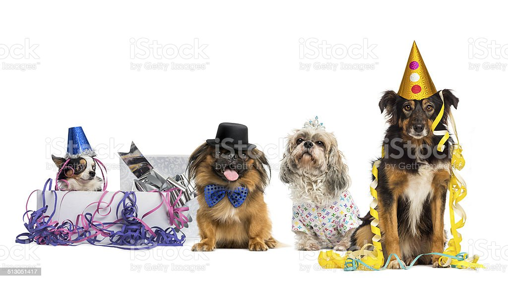 Dogs partying stock photo