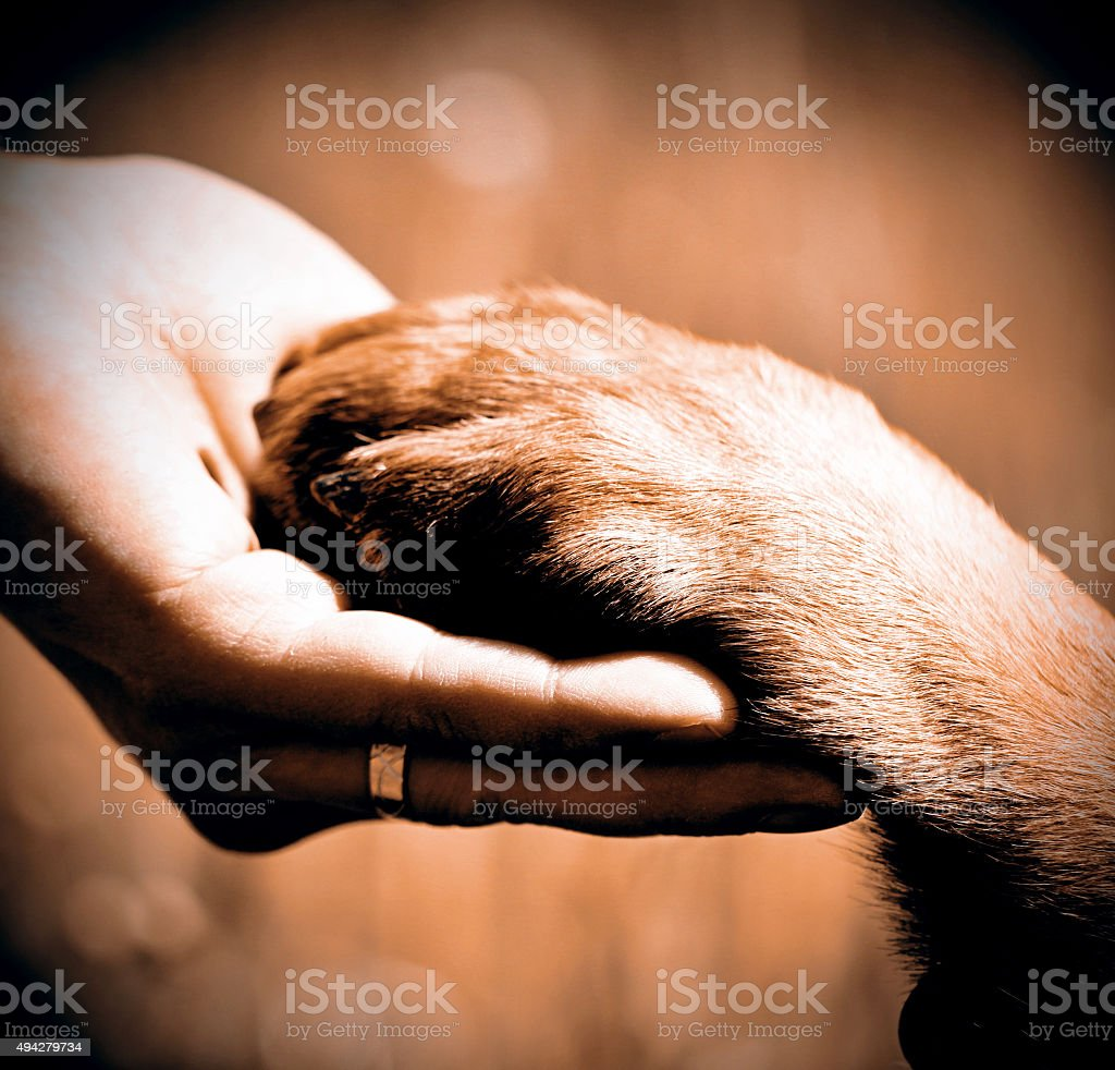 Dogs paw and mans hand stock photo