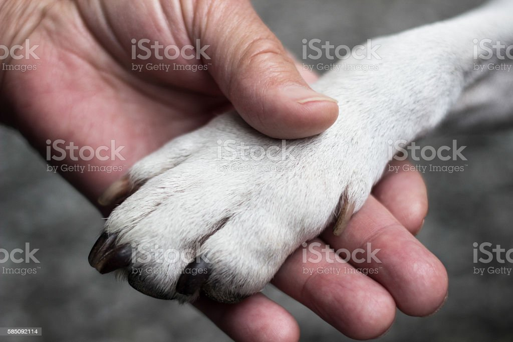 Dog´s paw and woman´s hand stock photo