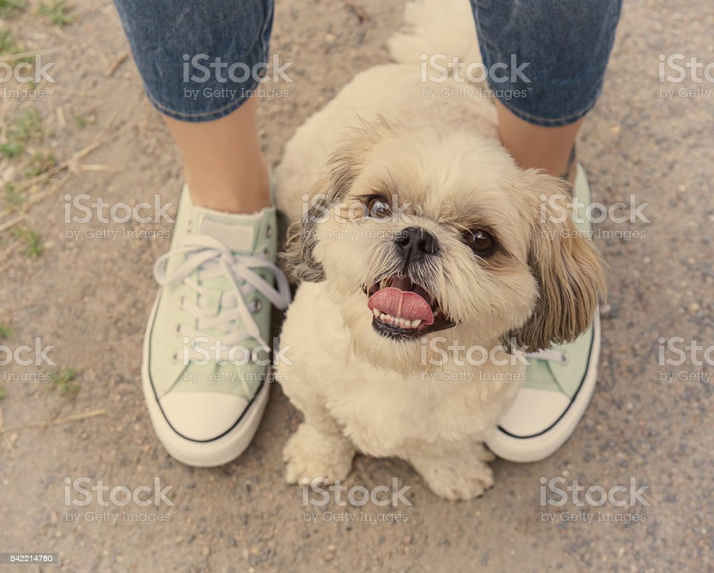 dog's paw feet next to the owner - walking together stock photo
