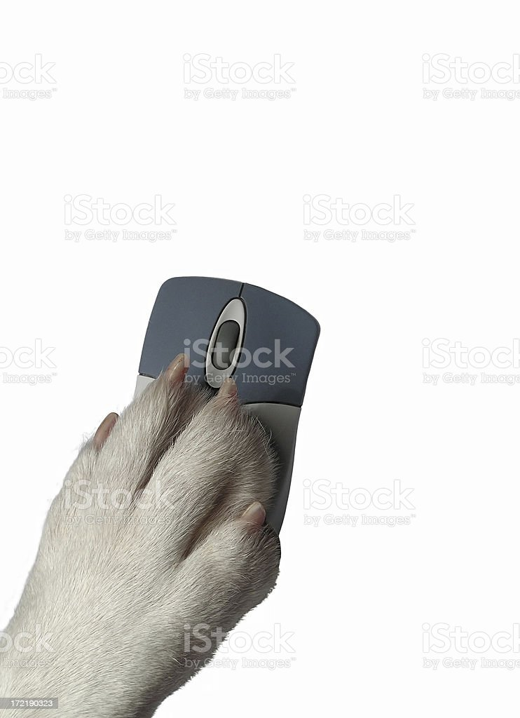 Dogs paw on mouse royalty-free stock photo
